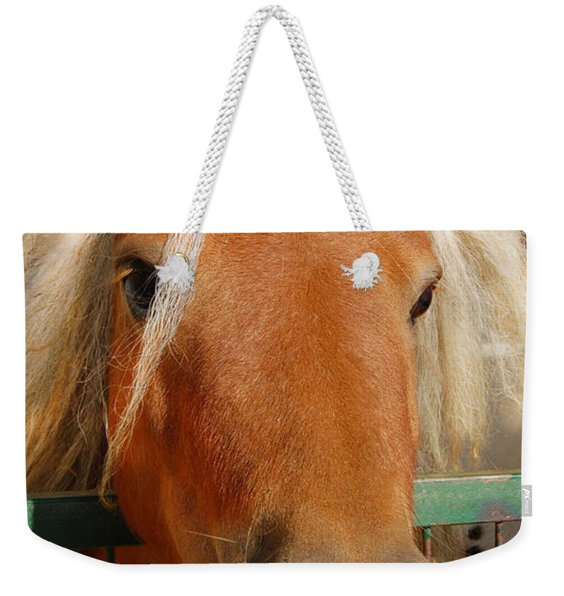 Pony Weekender Tote Bag featuring the photograph The Little Pony by Gina Dsgn