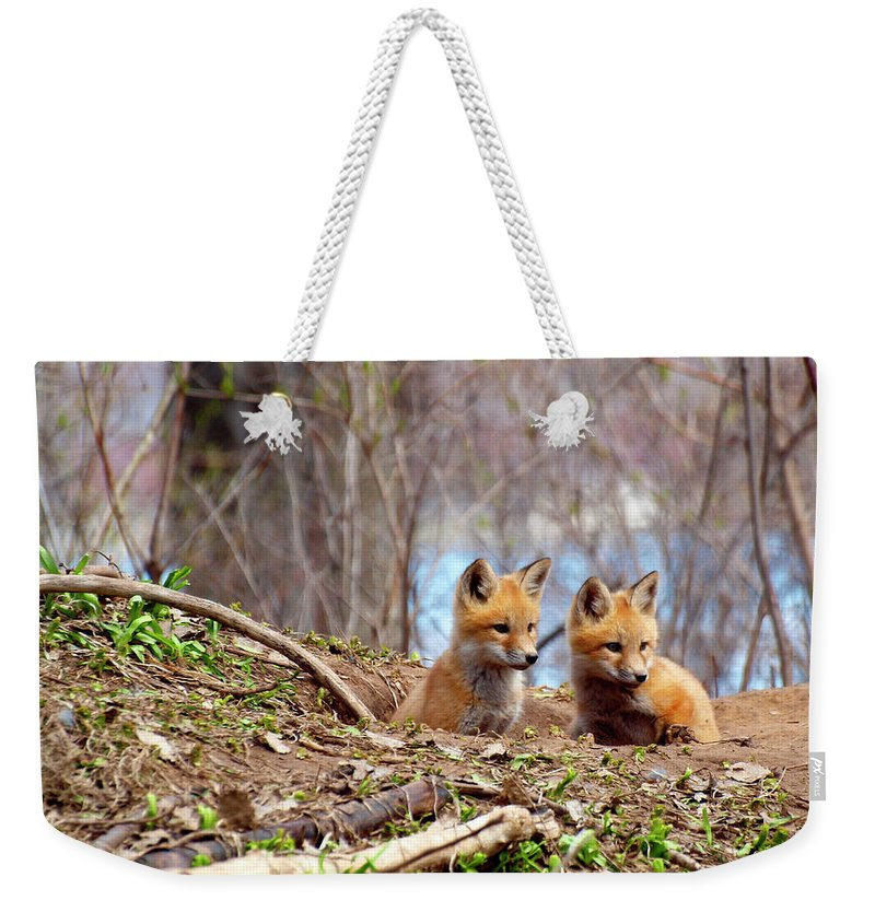 Red Foxes Weekender Tote Bag featuring the photograph The Look by Thomas Young