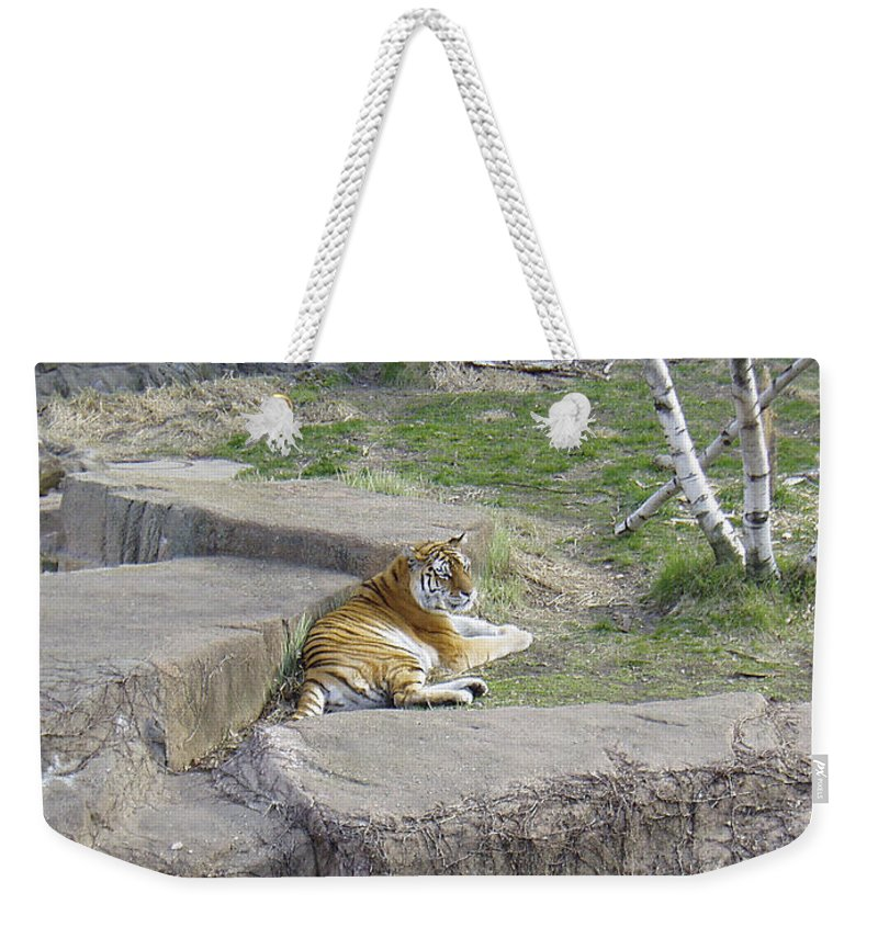 Tiger Weekender Tote Bag featuring the photograph The Lounging Tiger 1 by Verana Stark