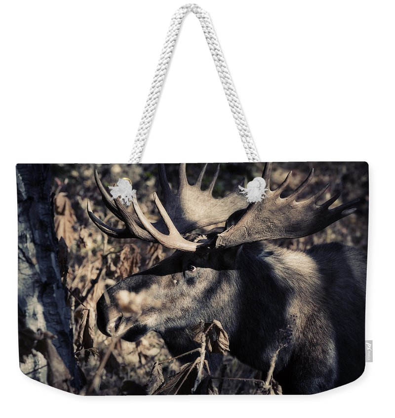 Moose Weekender Tote Bag featuring the photograph The Lurker by Ted Raynor
