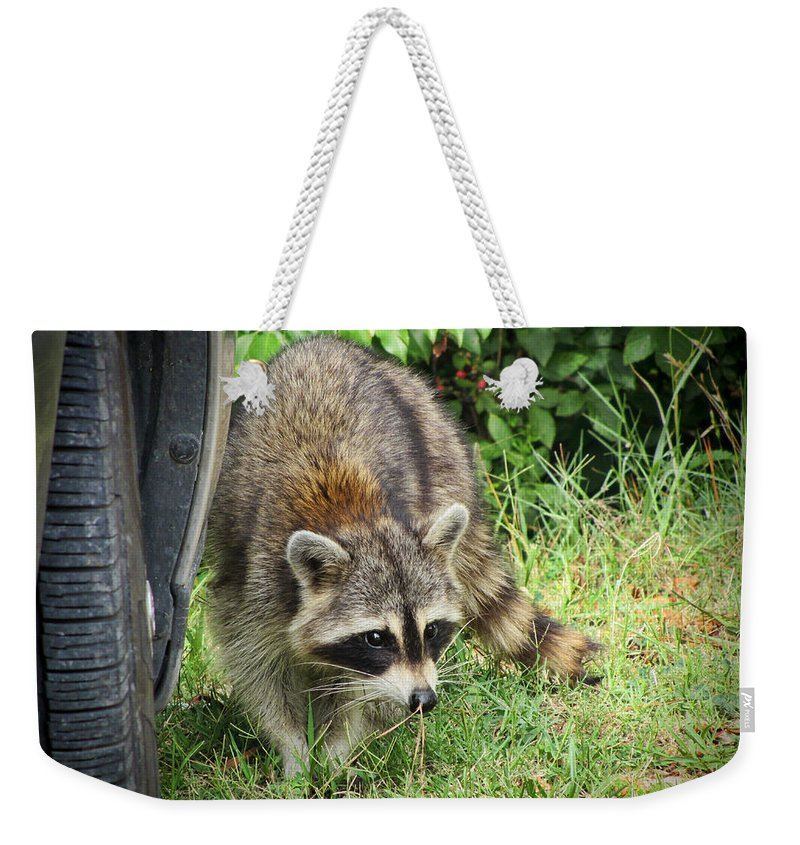 Procyon Lotor Weekender Tote Bag featuring the photograph The Masked Bandit by Kathy Clark