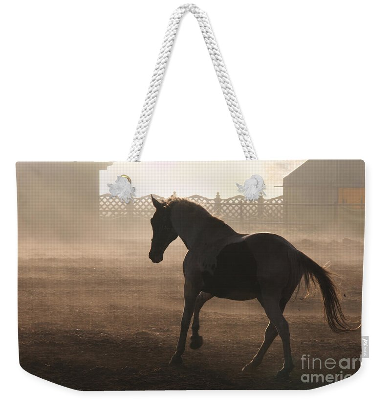 Horse Weekender Tote Bag featuring the photograph The Morning Light by Angel Tarantella