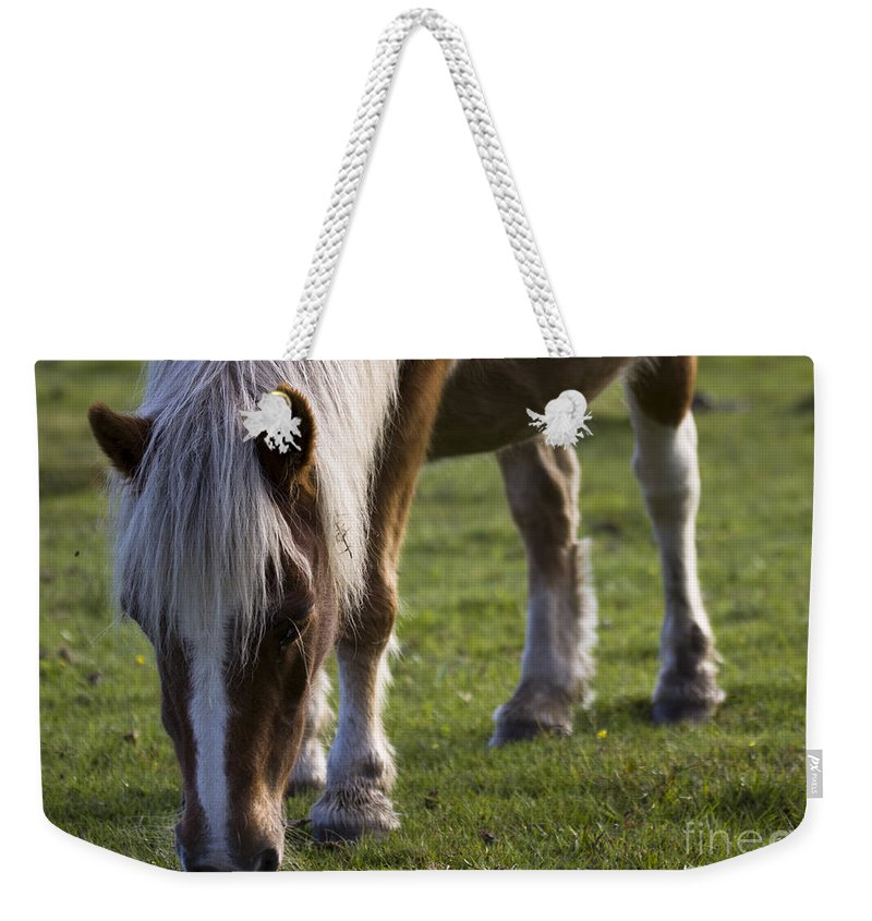 Palomino Horse Weekender Tote Bag featuring the photograph The New Forest Pony by Angel Ciesniarska