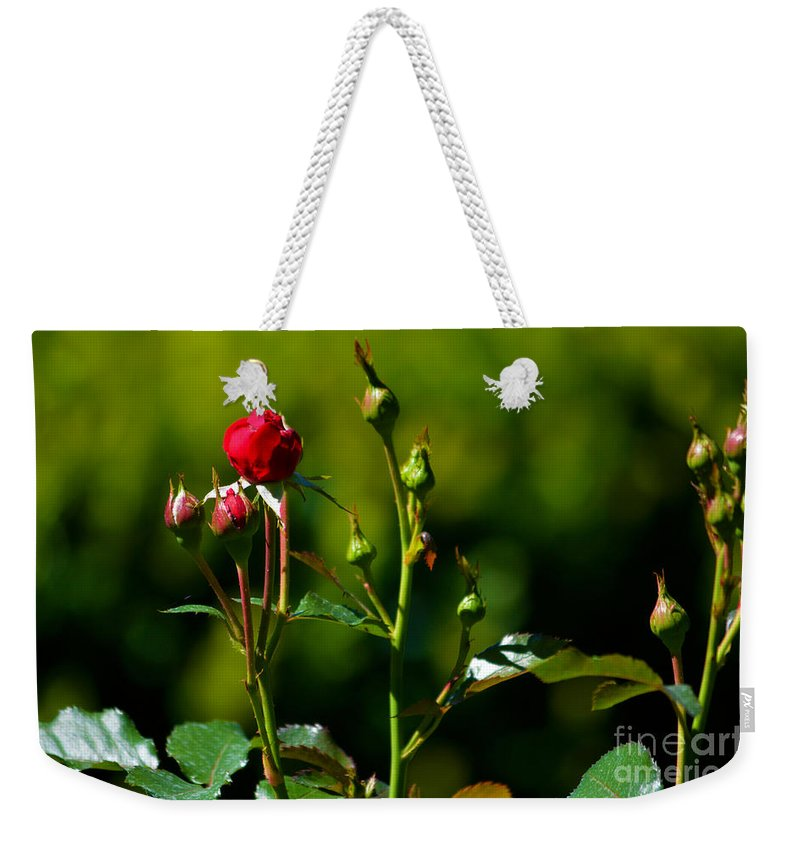 The New Generation Weekender Tote Bag featuring the photograph The New Generation by Susanne Van Hulst