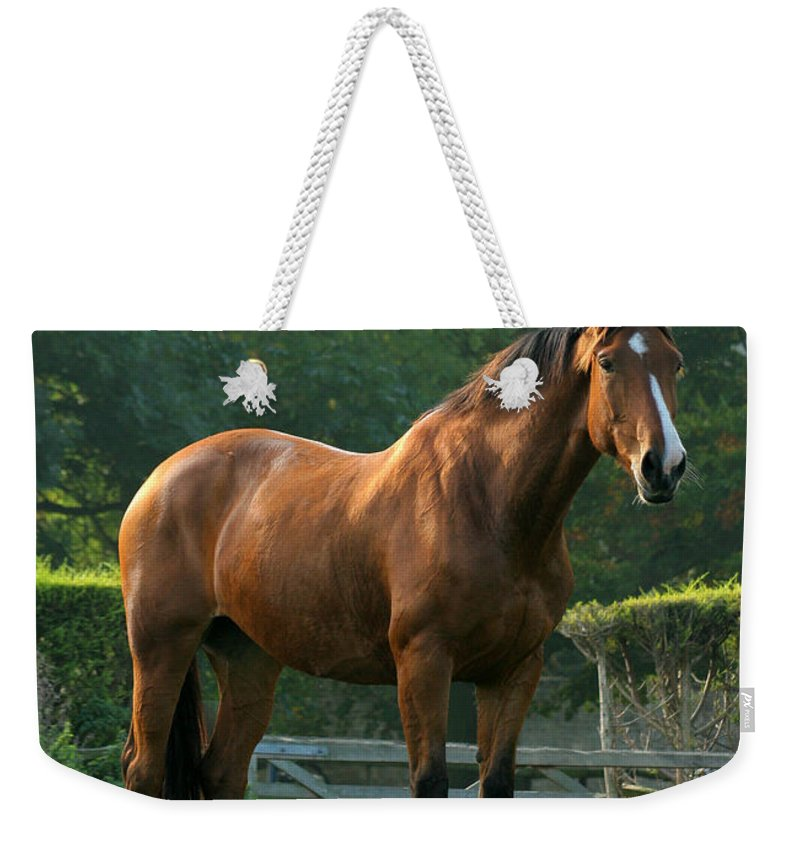 Horse Weekender Tote Bag featuring the photograph The Observer by Angel Ciesniarska