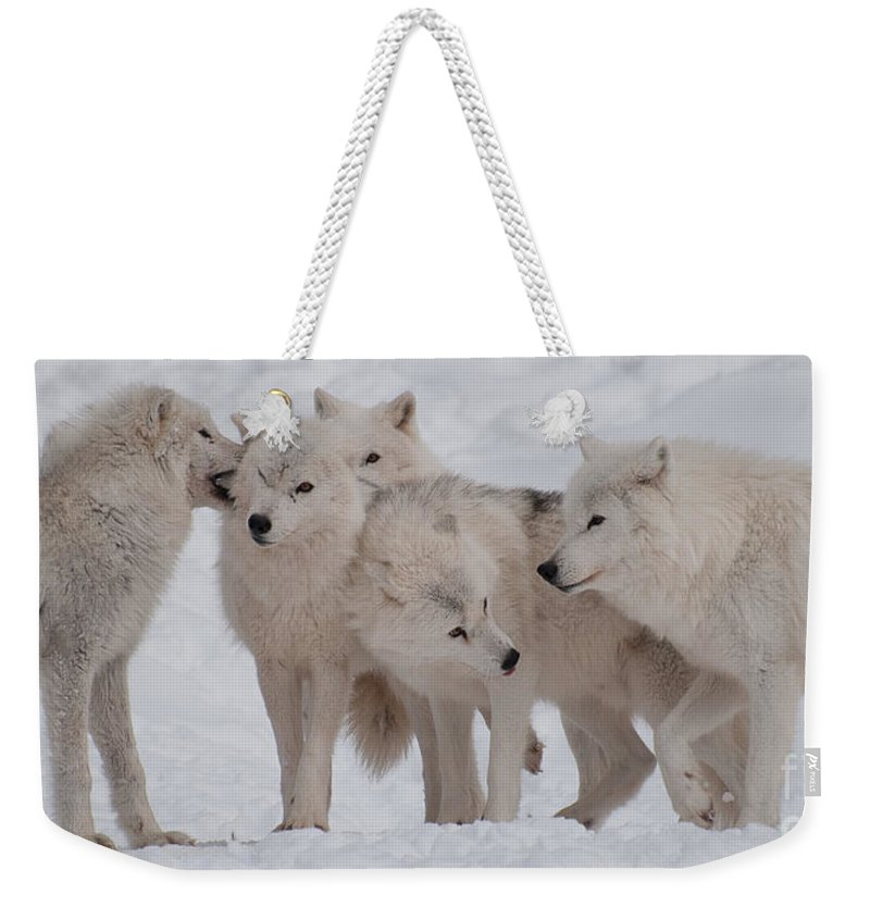 Arctic Wolves Weekender Tote Bag featuring the photograph The Pack by Bianca Nadeau