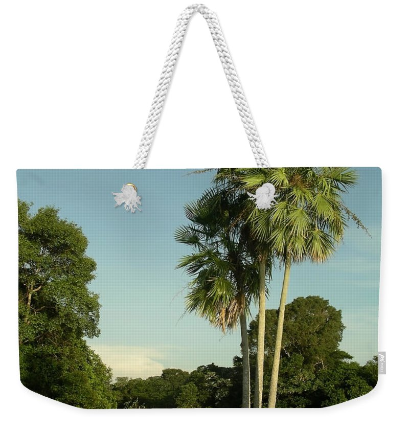 Brazil Weekender Tote Bag featuring the digital art The Pantanal by Carol Ailles
