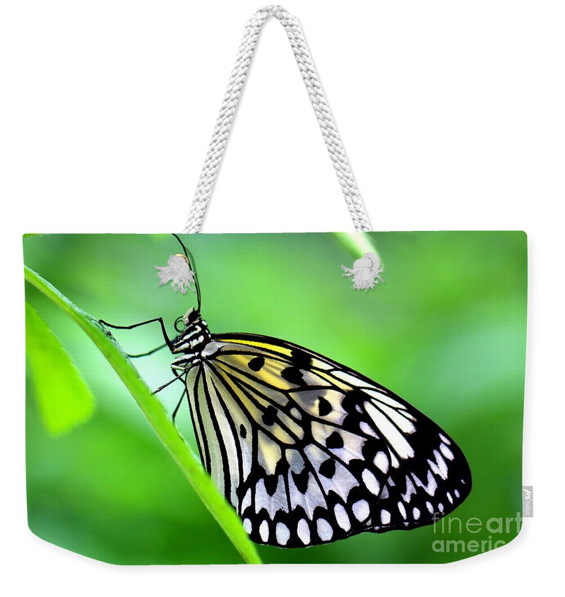 Butterfly Weekender Tote Bag featuring the photograph The Paper Kite Or Rice Paper Or Large Tree Nymph Butterfly Also Known As Idea Leuconoe by Amanda Mohler
