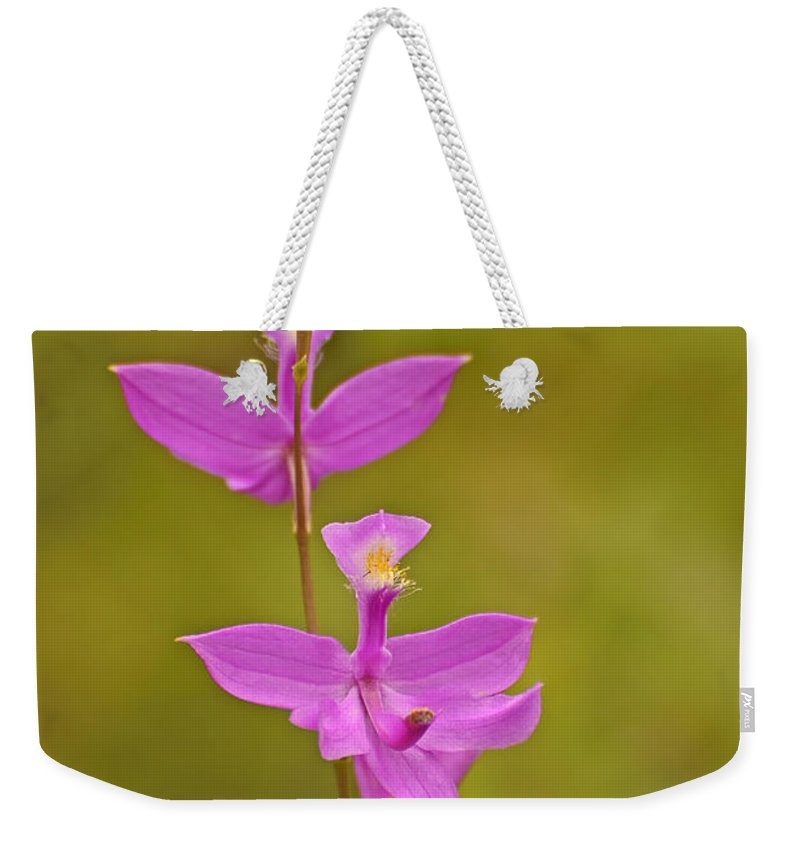 Grass Pink Weekender Tote Bag featuring the photograph The Prettiest Pink by Joshua McCullough