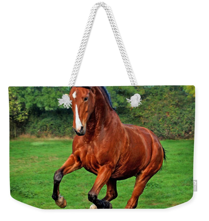 Horse Weekender Tote Bag featuring the photograph The Pure Power by Angel Tarantella