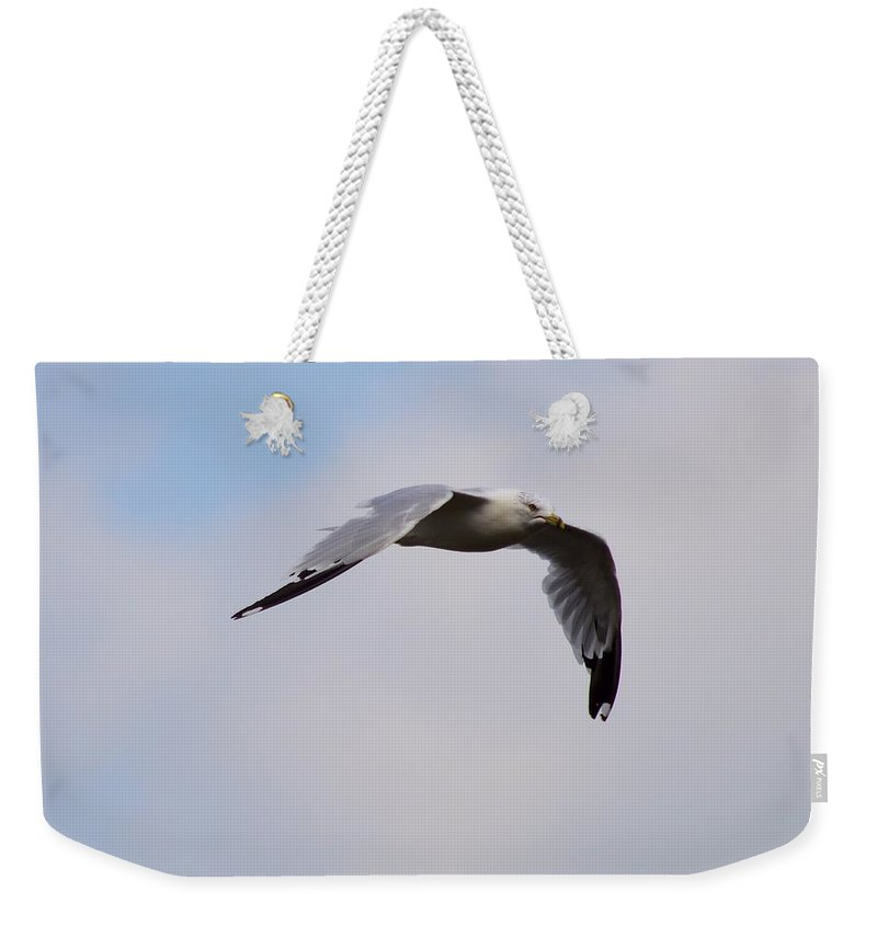 Seagull Weekender Tote Bag featuring the photograph The Quest by Bonfire Photography
