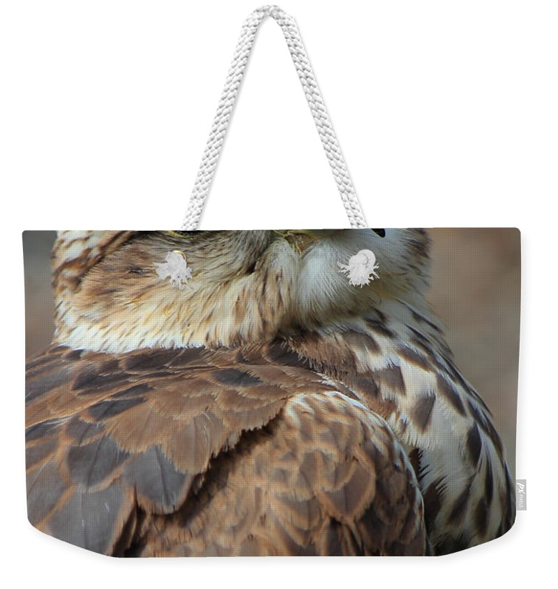 Saker Falcon Weekender Tote Bag featuring the photograph The Seductress by Randy Hall