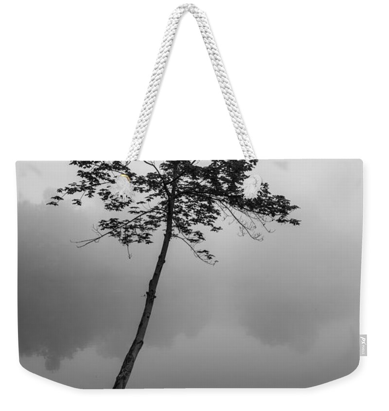 Tree Weekender Tote Bag featuring the photograph The Solitary Tree by Mark Robert Rogers