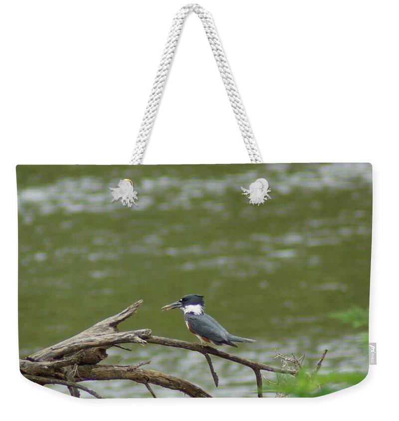 Digital Photography Weekender Tote Bag featuring the photograph The Southern Kingfisher Side View by Kim Pate