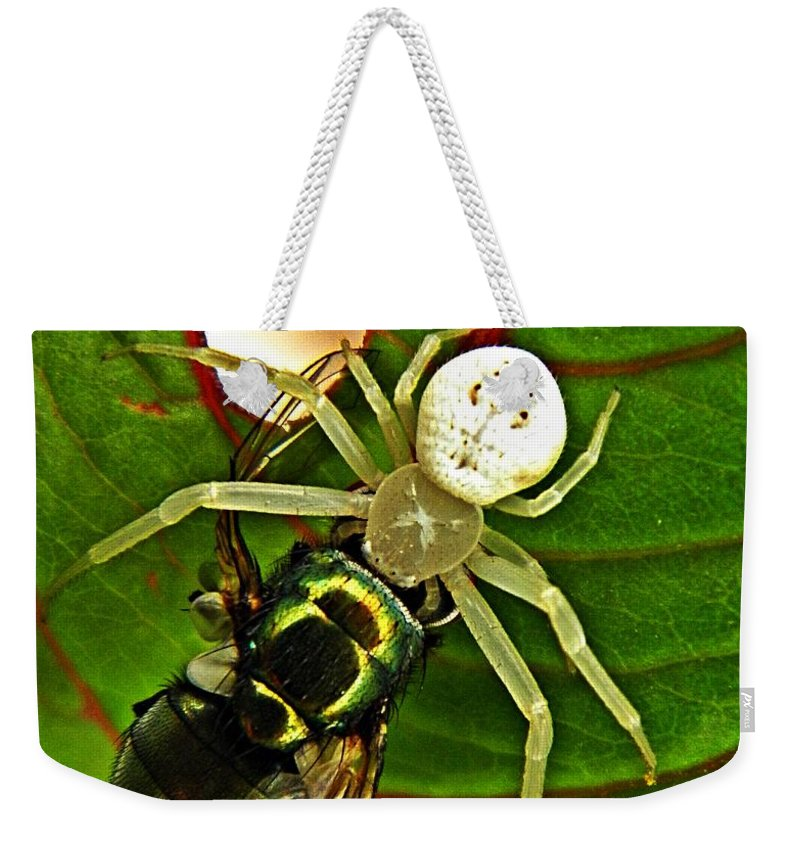 Spider Weekender Tote Bag featuring the photograph The Spider And The Fly by Chris Berry
