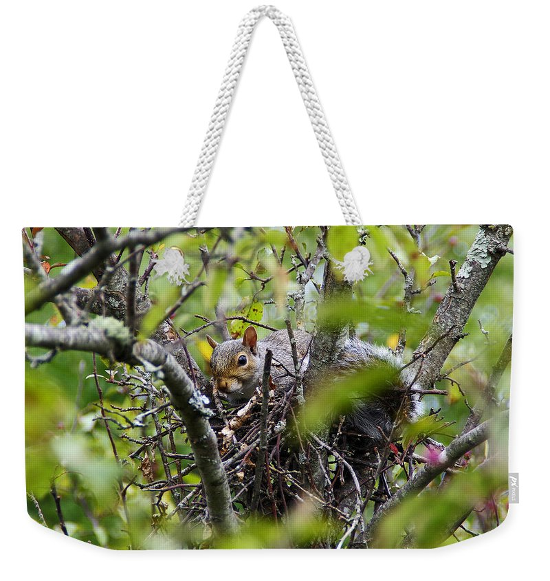 Wildlife Weekender Tote Bag featuring the photograph The Squirrel by Deborah Bowie