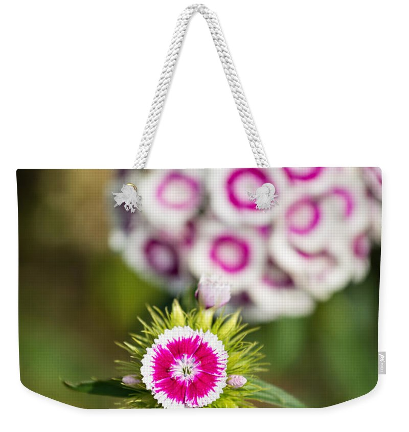 Dianthus Barbatus Weekender Tote Bag featuring the photograph The Star - Beautiful Spring Dianthus Flowers In Bloom. by Jamie Pham