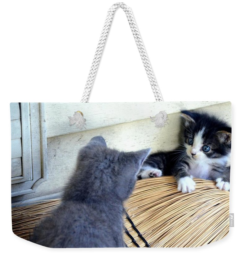 The Stare Down Weekender Tote Bag featuring the photograph The Stare Down by Maria Urso