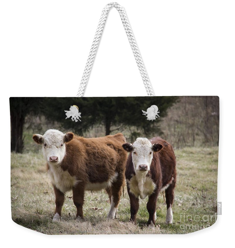 Cow Weekender Tote Bag featuring the photograph The Stare Down by Teresa Mucha