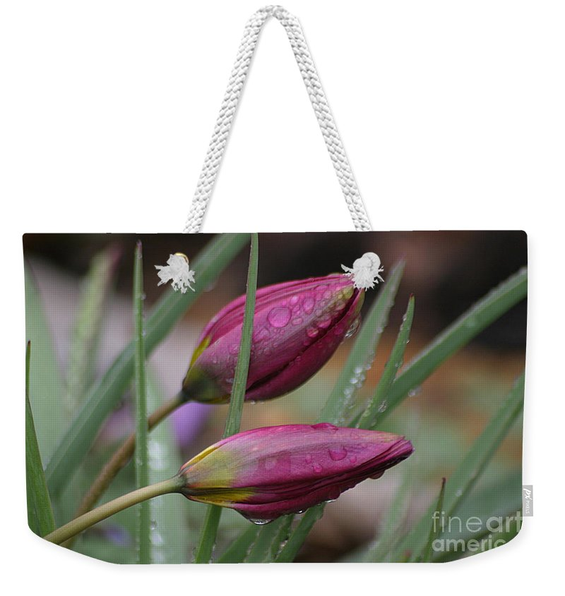 Tulips Weekender Tote Bag featuring the photograph The Sun Will Come Out Tomorrow by Living Color Photography Lorraine Lynch