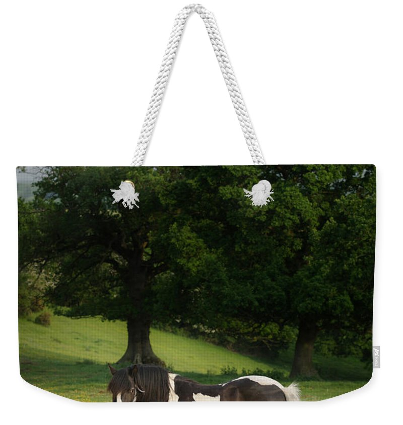 Horse Weekender Tote Bag featuring the photograph The Sunny Meadow by Angel Ciesniarska