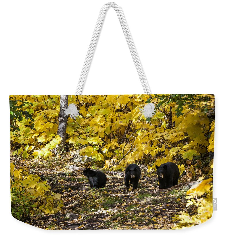 Bear Weekender Tote Bag featuring the photograph The Three Bears by Ted Raynor