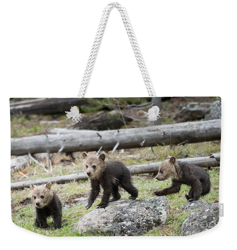 Grizzly Cubs Weekender Tote Bag featuring the photograph The Three Musketeers by Shannon Carson