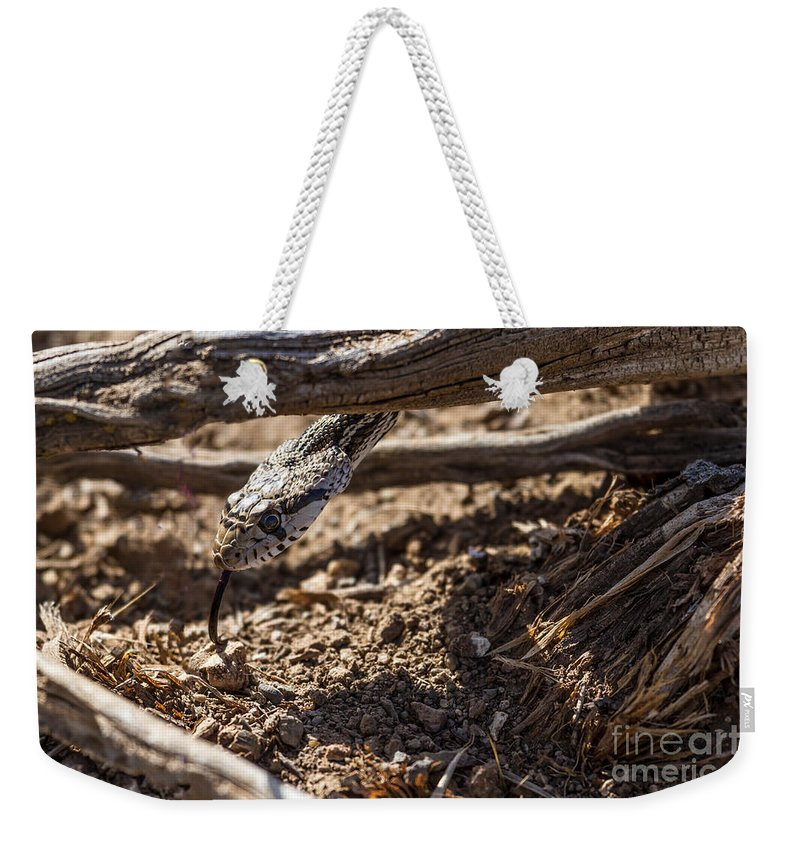 Pituophis Catenifer Weekender Tote Bag featuring the photograph The Tongue by Robert Bales