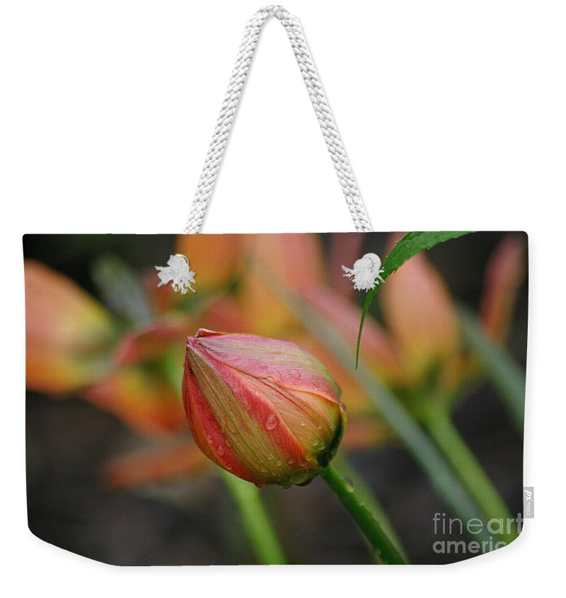 Tulip Weekender Tote Bag featuring the photograph The Tulip Bud by Living Color Photography Lorraine Lynch