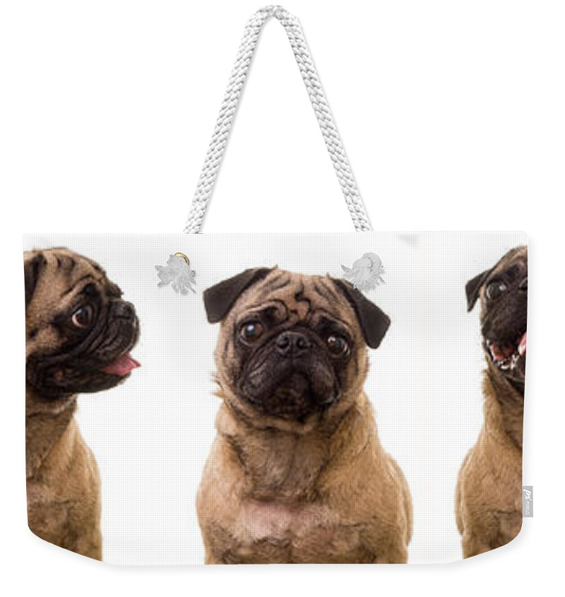 Pug Weekender Tote Bag featuring the photograph The Usual Suspects by Edward Fielding