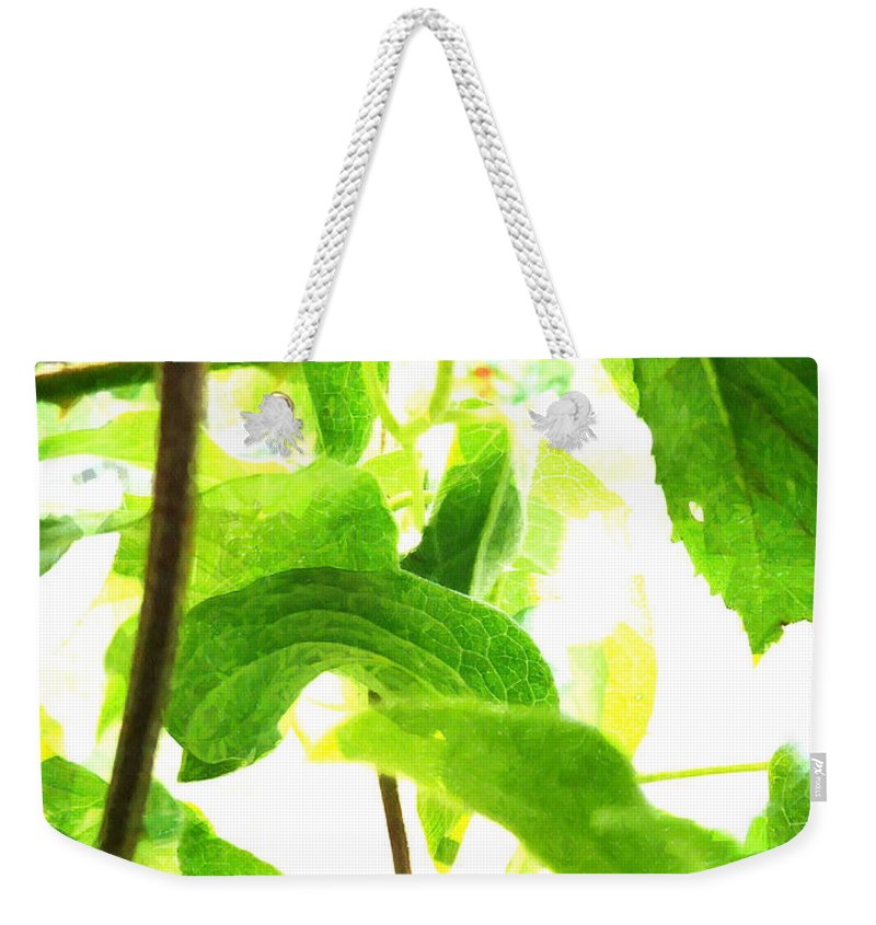 White Weekender Tote Bag featuring the photograph The Vine Light by Steve Taylor
