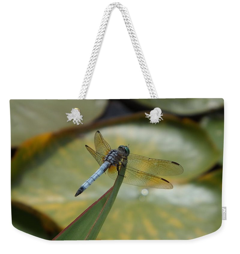 Lily Pond Weekender Tote Bag featuring the photograph The Watcher by Caryl J Bohn
