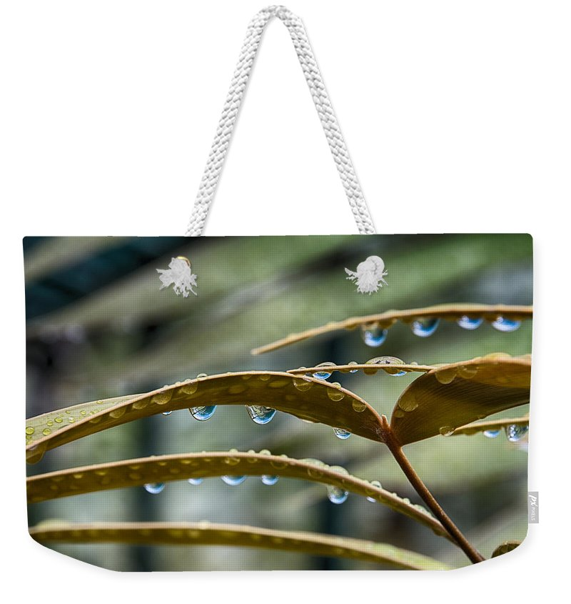 Leaves Weekender Tote Bag featuring the photograph The Wet Of The Rain V2 by Douglas Barnard