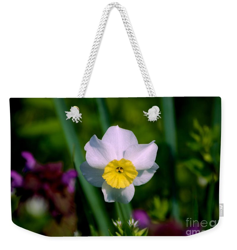 Close Up Weekender Tote Bag featuring the photograph The White And Yellow Daffodil by Mark Dodd
