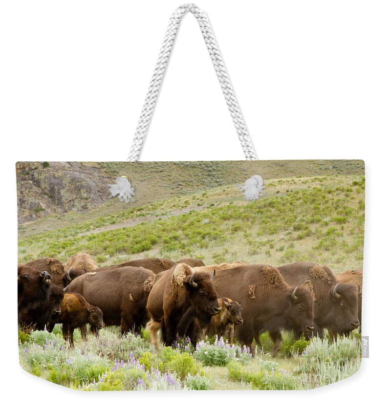 Bison Buffalo Weekender Tote Bag featuring the photograph The Wild West by Bill Gallagher