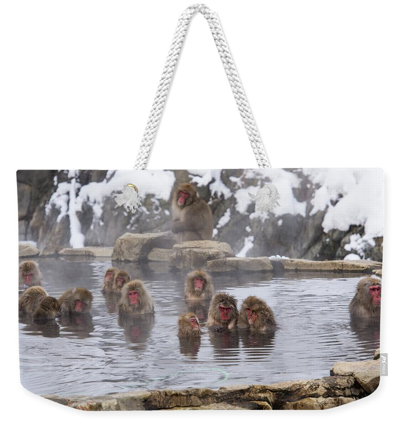 Snow Weekender Tote Bag featuring the photograph The World Of Snow Monkey by I Love Photo And Apple.