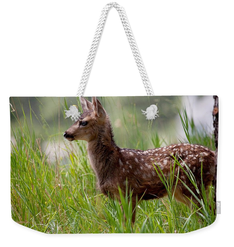 Fawn Weekender Tote Bag featuring the photograph The Young Prince by Jim Garrison