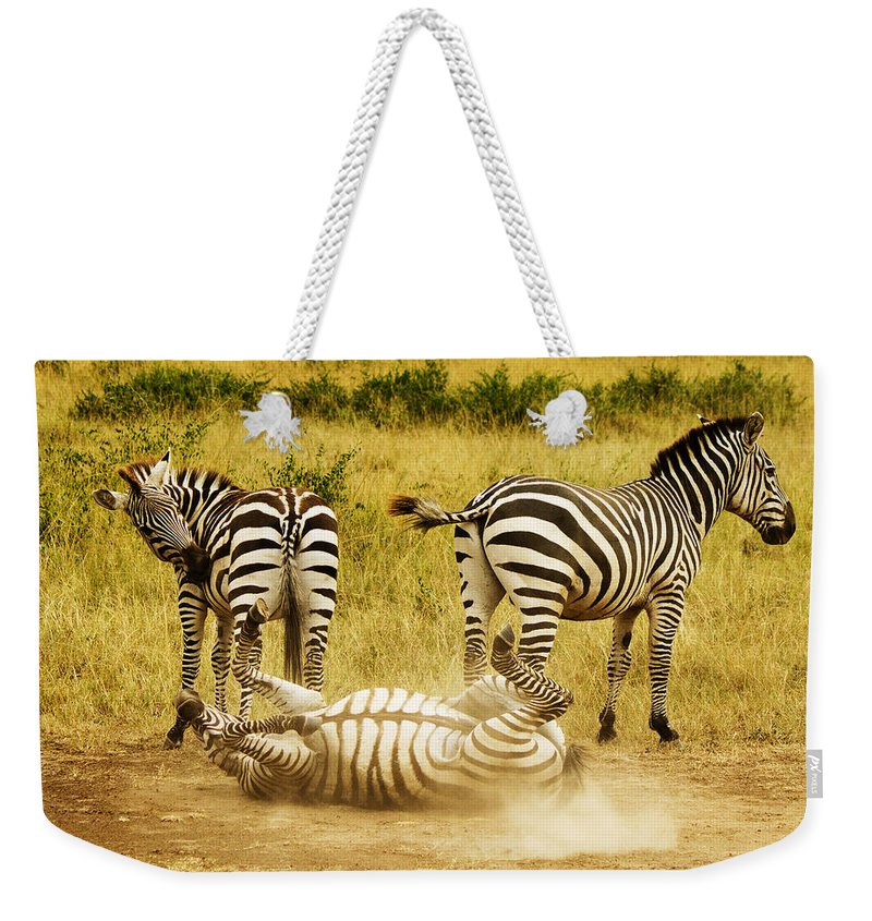 Zebra Weekender Tote Bag featuring the photograph They See Me Rollin by Amy Warr