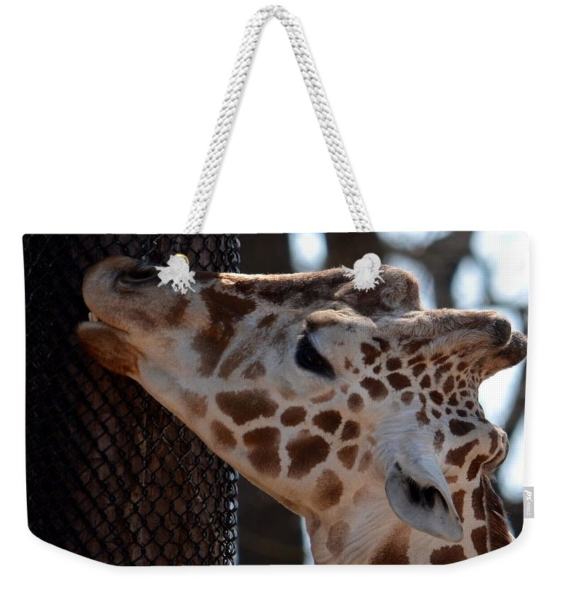 Thinking Africa Weekender Tote Bag featuring the photograph Thinking Africa by Maria Urso