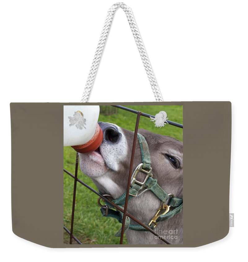Calf Weekender Tote Bag featuring the photograph Thirsty Baby by Ann Horn