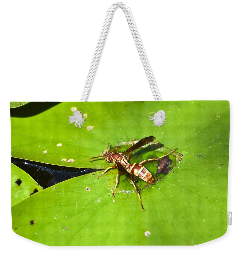 Bee Weekender Tote Bag featuring the photograph Thirsty Bee On Waterlily by Allen Sheffield