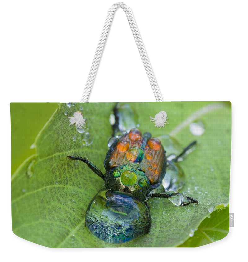 Background Weekender Tote Bag featuring the photograph Thirsty Beetle by Mircea Costina Photography