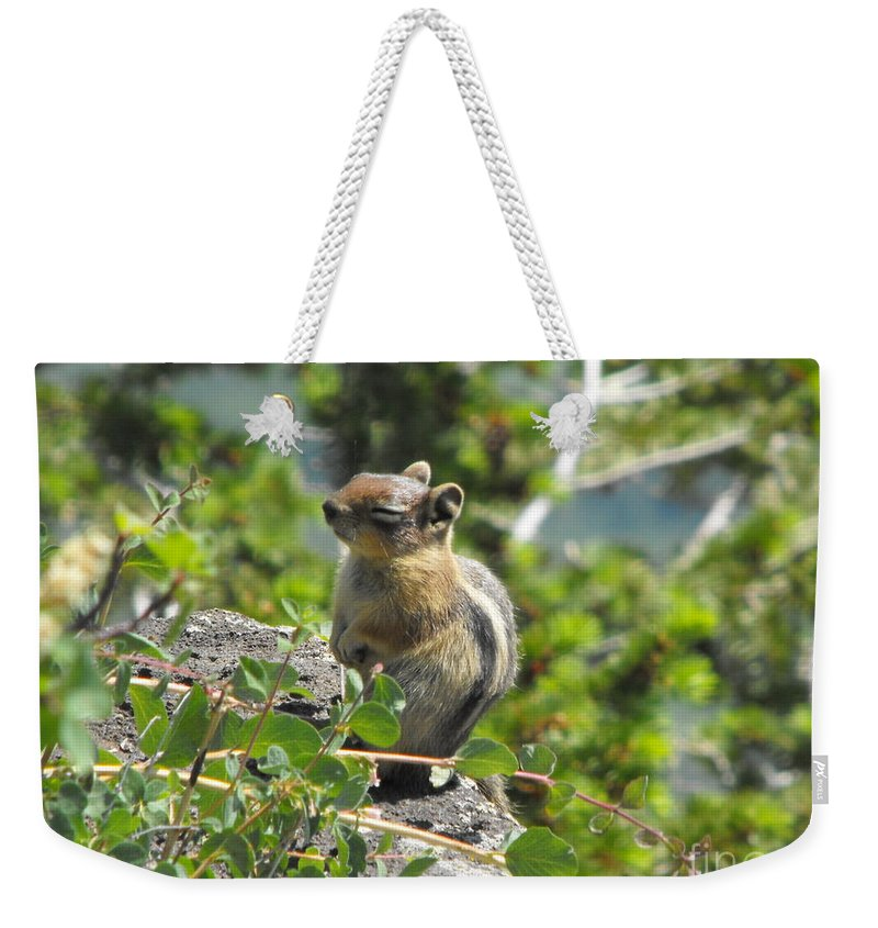 Animals Weekender Tote Bag featuring the photograph This Is The Life by Brandi Maher