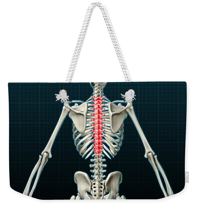 Science Weekender Tote Bag featuring the photograph Thoracic Vertebrae, Illustration by Evan Oto