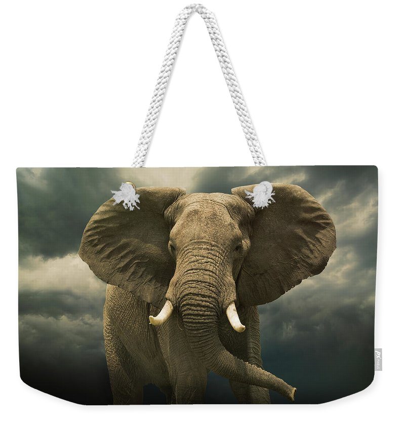 Kenya Weekender Tote Bag featuring the photograph Threatening African Elephant Under by Buena Vista Images