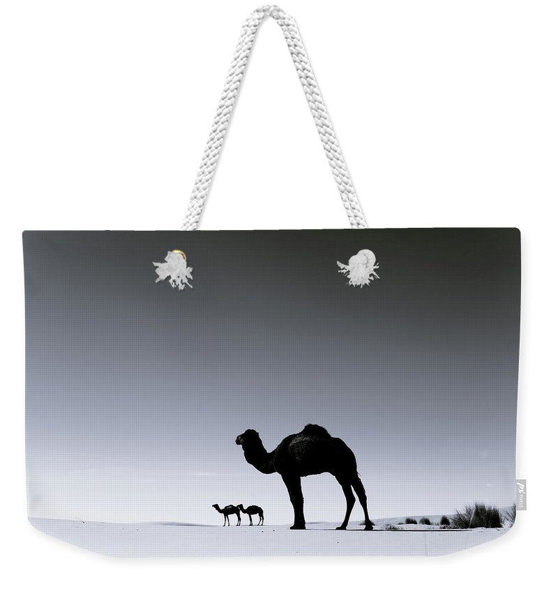 Scenics Weekender Tote Bag featuring the photograph Three Camels In The Sahara Desert by Zodebala