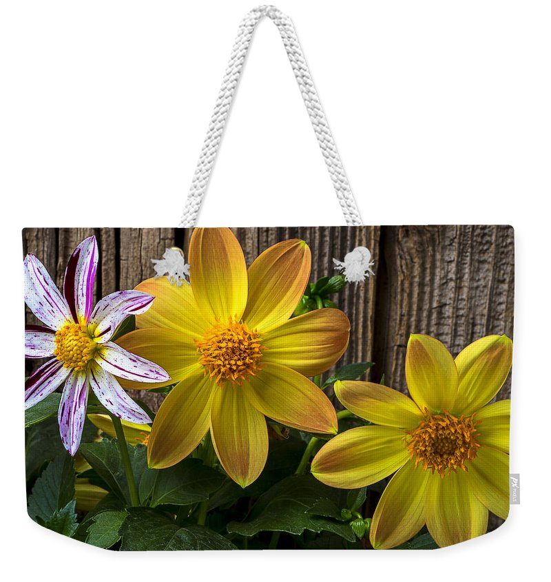 Fireworks Dahlia Weekender Tote Bag featuring the photograph Three Dahlias by Garry Gay