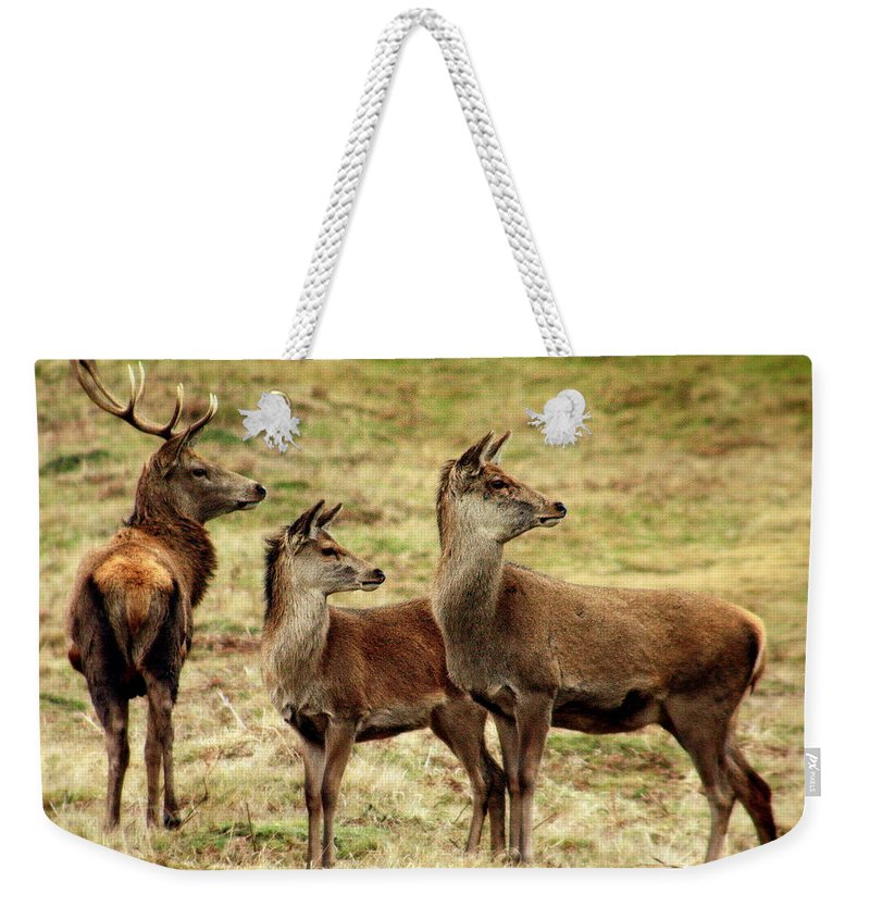 Nature Weekender Tote Bag featuring the photograph Wildlife Three Red Deer by Linsey Williams