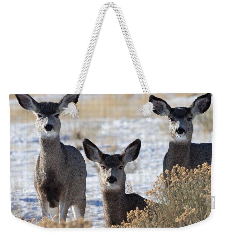 Mule Deer Weekender Tote Bag featuring the photograph Three Deer by Max Waugh