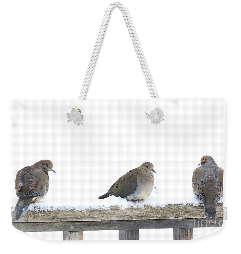 Three Birds Weekender Tote Bag featuring the photograph Three Doves On A Railing by Cheryl Baxter